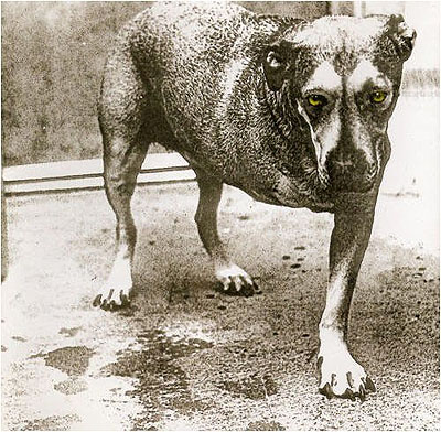 alice_in_chains_dog